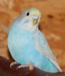 Lennox hat sich als Henne entpuppt - auch schön! :-)