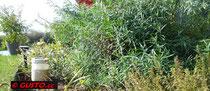 Kräuter aus dem eigenen Garten