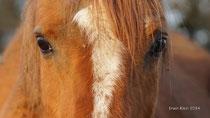 Sie wird seit Jahren im Winter von Pferden abgeweidet.