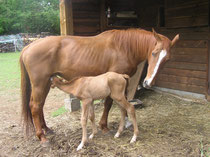 cavaltitude chevaux