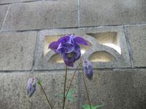 会堂用地の花