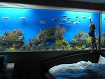 Hotel H2O: Mit den Fischen schlafen