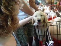 Pets-Market auf dem Chatuchak Market