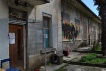 Tierheim Kroatien