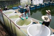 プールにたまった水の除染作業。ゼオライトを入れたタンクに水を入れ、放射性物質を吸着させた=福島県伊達市保原町富沢の富成小で