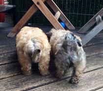 Clifford und Cooper