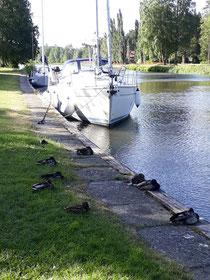 Still waiting for repair & ducks too