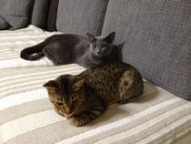 うちの猫達
