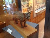 西表野生動物保護センター 写真