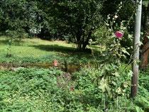Hildegard Kitas Garten