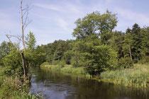 Lebensraum der Grünen Flussjungfer, Ophiogomphus cecilia.
