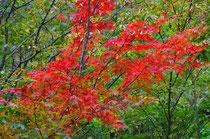 達原渓谷の紅葉