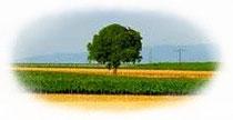 Steuerberatung nach ökologischen Gesichtspunkten