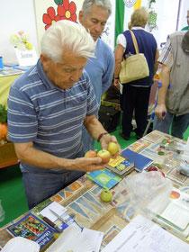 Sigurd Schossig beim Bestimmen der Äpfel (Foto: Marcel Majchrzak)
