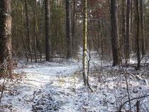 Ein kleines Winterbild von unserer Strecke...