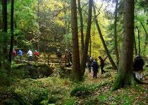 Wandern im Waldnaabtal
