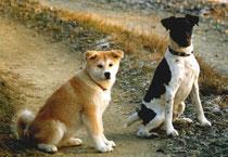 Akia und Budges 1991