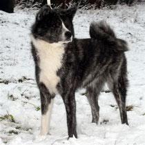 Unsha Dezember 2009