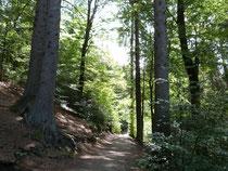 Überreste des Hellwegs im Teutoburger Wald