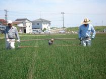 《農作業風景》