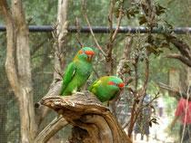 Im Healesville Sanctuary