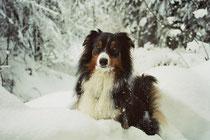 Timea's Lieblingsjahreszeit - der Winter