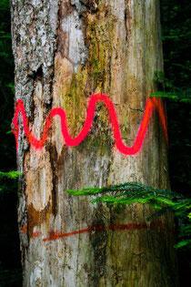 Höhlenbaum, Habitatbaum, Totholz, Käferbaum, Markierung, Höhlenbaummarkierung, Spechte, Vogelschutz