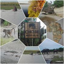 Chobe Water Villa's in Namibia / Chobe Water Villa's in Namibia