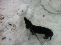 Aika und der Schneehund