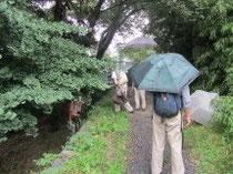 雨の中の調査(上郷水管橋付近)