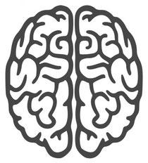 Ansicht beider Gehirnhälften von oben