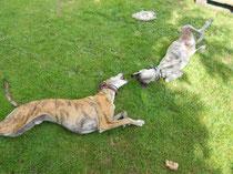 Schlupp geniesst sein Hundeleben