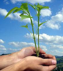 Rondonia web - responsabilidade ambiental