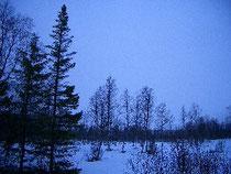 太陽の出ない、蒼い時間が続く森
