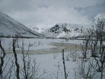 雪の質がすっかり変わった湿原