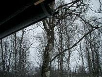 軒下から滴る雪解け水