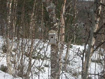 春に主が戻るのを待つ巣箱