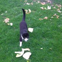 Katten eten bedorven voedsel