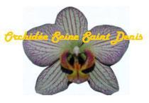 Logo OSSD