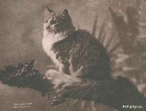 Kaart met daarop een Maine Cat (C.E. Bullard 1899)