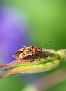Mittel gegen Käfer
