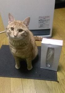 アカンタレ金ちゃんがこんな立派な猫さんに☆