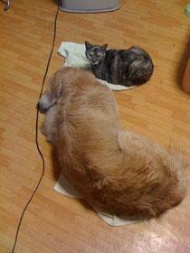 犬のリコ&リズちゃんが保母さんだったもんね
