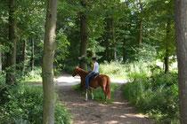 Zu Pferd  neue, eigene Wege entdecken.