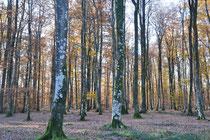 The Bercé Forest