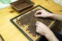 焙煎後のコーヒー豆の選別