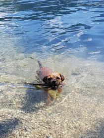 Nuala liebt es zu schwimmen.