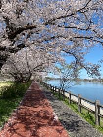 茶色い道が遊歩道なの♪すごく良いお天気でしたね〜。