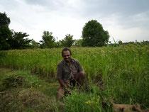 Association de Raghi et d'arbres fruitiers dans les champs de Narayanna Reddy