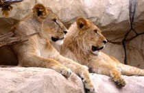 www.zoo-dresden.de